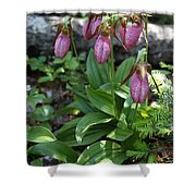 Pink Ladys Slipper Shower Curtain
