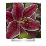 Pink-lily Shower Curtain