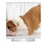 Playful Bulldog Pup Shower Curtain