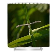 Plume Moth Shower Curtain