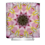 Plumeria 2 Shower Curtain