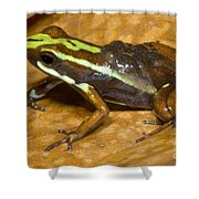 Poison Frog With Eggs Shower Curtain
