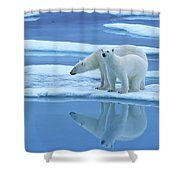 Polar Bear Ursus Maritimus Pair On Ice Shower Curtain
