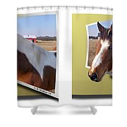 Pony Pose - Gently Cross Your Eyes And Focus On The Middle Image Shower Curtain