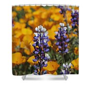 Poppies And Lupine Flowers In A Santa Shower Curtain