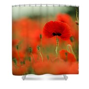 Poppy Flowers 01 Shower Curtain