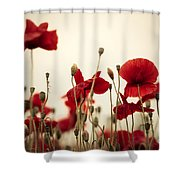 Poppy Flowers 03 Shower Curtain