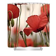 Poppy Flowers 04 Shower Curtain by Nailia Schwarz