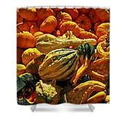Pumpkins And Gourds Shower Curtain by Elena Elisseeva