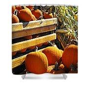 Pumpkins Shower Curtain by Elena Elisseeva