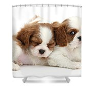 Puppies Shower Curtain