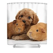 Puppy And Guinea Pigs Shower Curtain