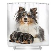 Puppy Pals Shower Curtain