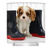 Puppy With Rain Boots Shower Curtain by Jane Burton