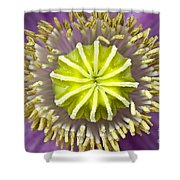 Purple Poppy Blossom Into A Star Shower Curtain