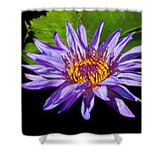 Purple Waterlily Shower Curtain