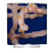 Pygmy Seahorse On Sea Fan, Papua New Shower Curtain by Steve Jones