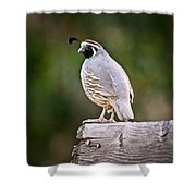 Quail Shower Curtain
