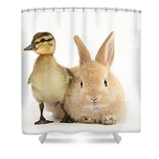 Rabbit And Duckling Shower Curtain