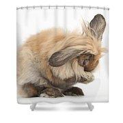 Rabbit Grooming Shower Curtain