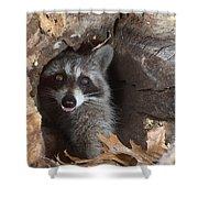 Raccoon Procyon Lotor Shower Curtain