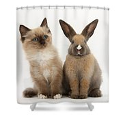 Ragdoll-cross Kitten And Young Rabbit Shower Curtain