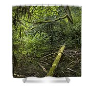 Rain Forest On Vancouver Island Shower Curtain