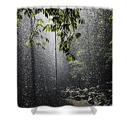 Rainforest, Bellingen, Australia Shower Curtain
