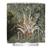 Rare Tiger Shrimp On Volcanic Sand Shower Curtain