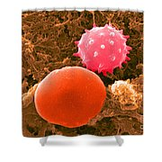 Red And White Blood Cells, Sem Shower Curtain
