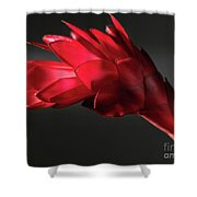 Red Ginger Alpinia Purpurata Flower Shower Curtain