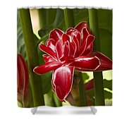 Red Ginger Lily Shower Curtain