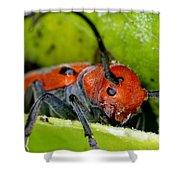 Red Milkweed Beetle Shower Curtain