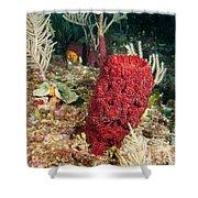 Red Sponge Shower Curtain