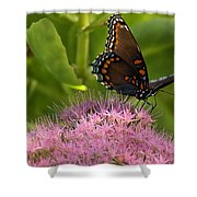 Red Spotted Purple Butterfly On Sedum Shower Curtain