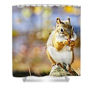 Red Squirrel Shower Curtain by Elena Elisseeva