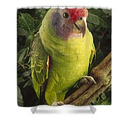 Red-tailed Amazon Amazona Brasiliensis Shower Curtain