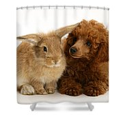 Red Toy Poodle And Rabbit Shower Curtain