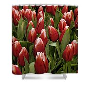 Red Tulip Heaven Shower Curtain