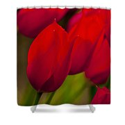 Red Tulips In Holland Shower Curtain