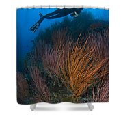Red Whip Fan Coral With Diver, Papua Shower Curtain