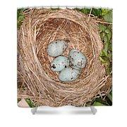 Red-winged Blackbird Nest Shower Curtain