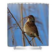 Reed Warbler Shower Curtain