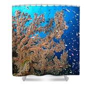 Reef Scene With Sea Fan, Papua New Shower Curtain