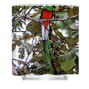 Resplendent Quetzal Shower Curtain