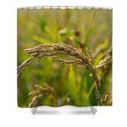 Rice Shower Curtain