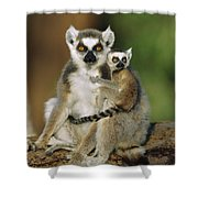 Ring-tailed Lemur Mother And Baby Shower Curtain