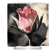 Rita Rosebud Pink Shower Curtain