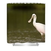Roseate Spoonbill Ajaia Ajaja Shower Curtain
