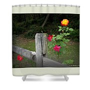 Roses And Fence  Shower Curtain